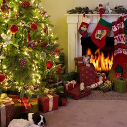 クリスマスプレゼントはツリーの下に置く