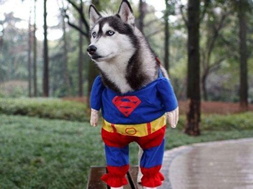 スーパーマンの犬用ハロウィンコスチューム