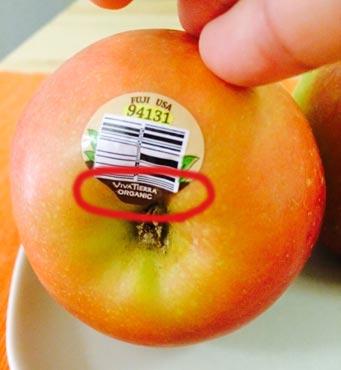 organic-fruits-06