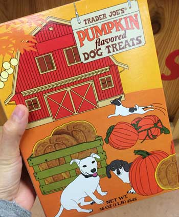 traderjoes-pumpkin-16