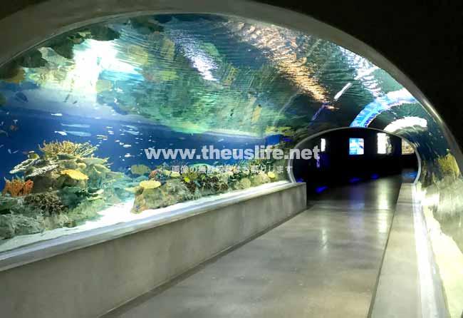 OdySea Aquariumの水で囲まれた通路