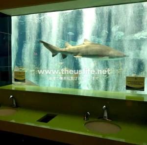 OdySea Aquariumのトレイ内のサメ