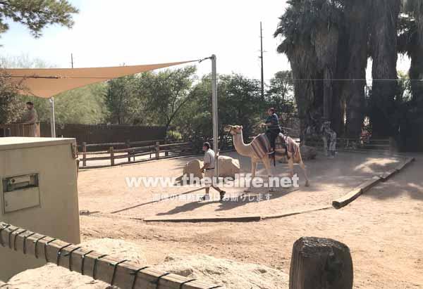 Phoenix Zooのキャメルライド
