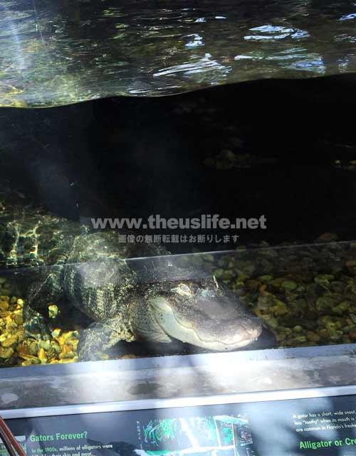 フロリダ水族館内