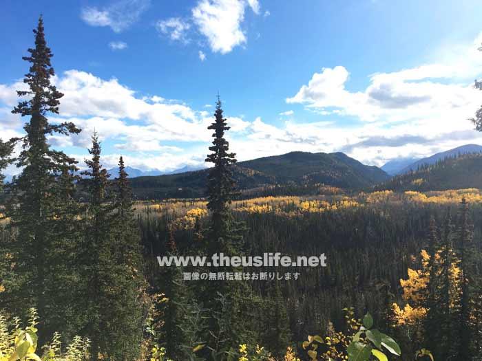 アラスカ鉄道から見た秋の風景